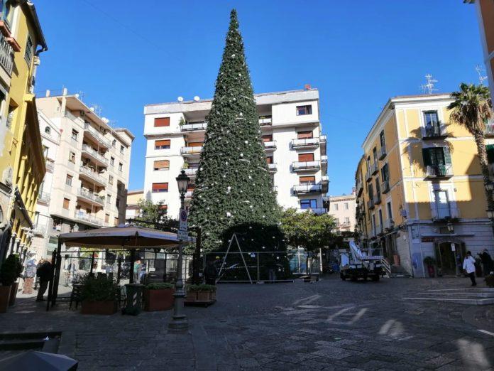 albero piazza portanova, salerno