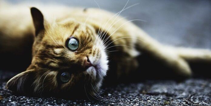 gattino pastena salerno