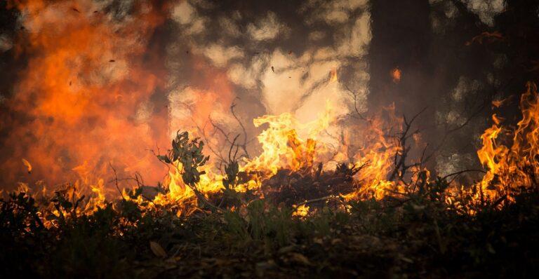 Vallo di Diano, brucia la vegetazione per il quarto giorno consecutivo