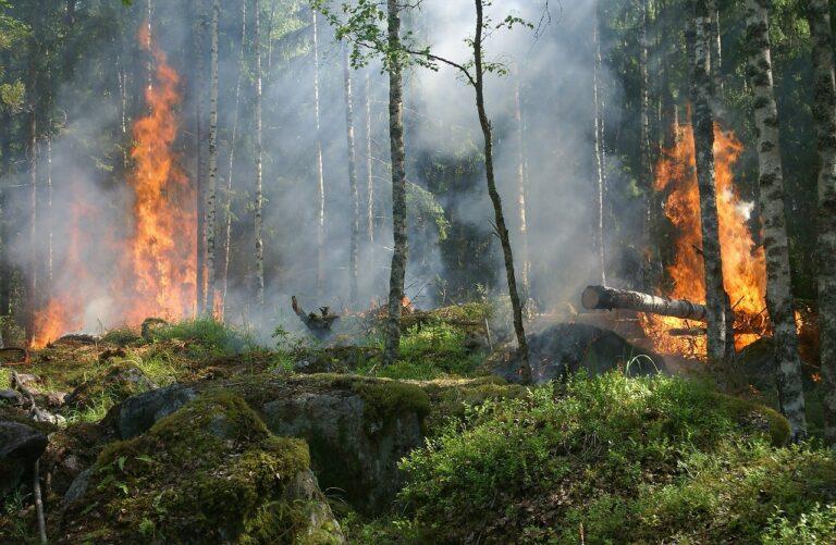 Pellezzano, attivato il nuovo servizio per prevenire gli incendi boschivi