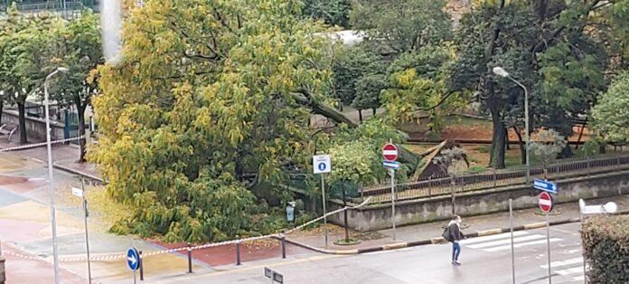 alberi picentia