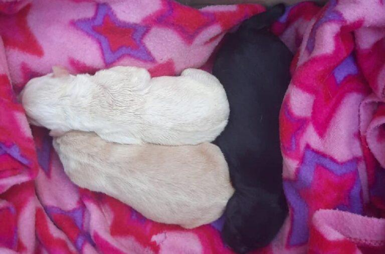 Giffoni Sei Casali, ritrovati cuccioli in un sacchetto. L'ira del Comune