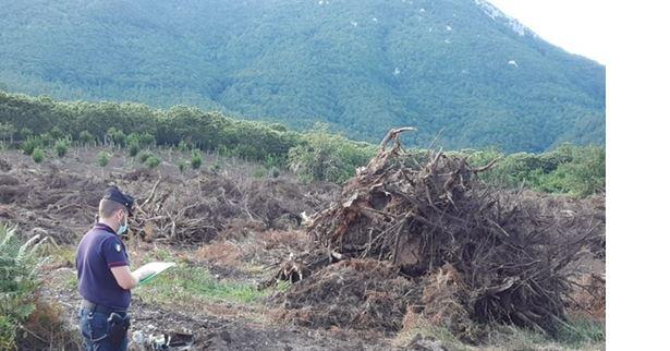 Contolli ambientali: taglio di bosco ed estirpazione di ceppaie